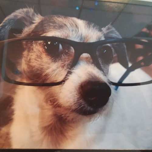 Allens Dog with glasses on
